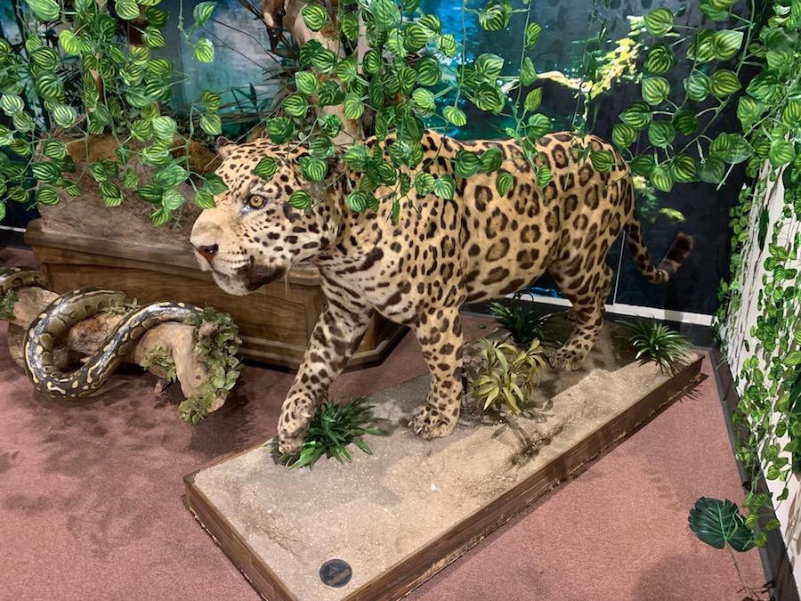 Jaguar Preview.jpg