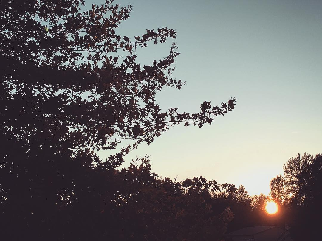 Slow, slow sunset here in the Washington woods.