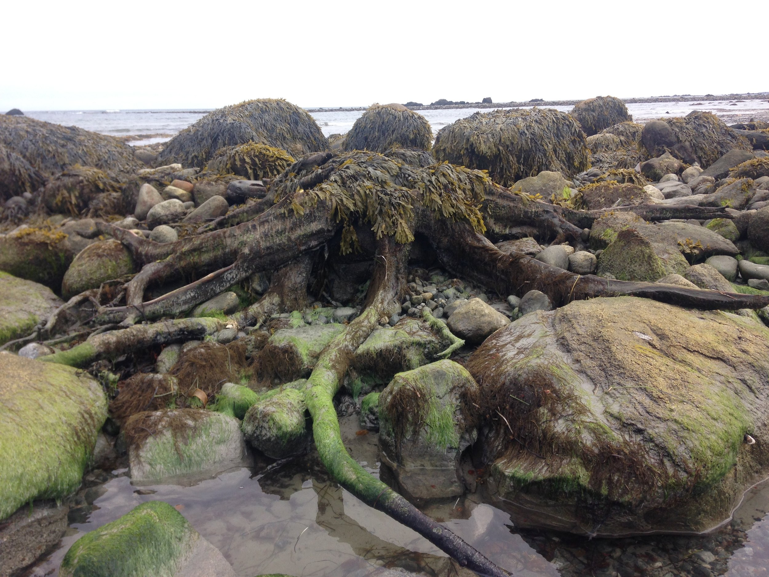 One of the many tree stumps we found in the drowned forest