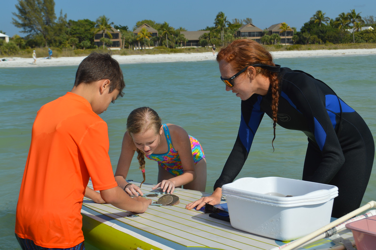 Photo from sand dollar research and education project out of the  Sanibel Sea School  in Florida. A sample of what is to come!