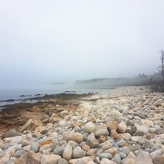 I guess you could call this the calm after the storm!! ☁️☁️ #wildweekendworkshop #coastallandscapes #foggydays #wildernessculture #harrisonlewiscentre #lowtide #cozy #nature #southshorens