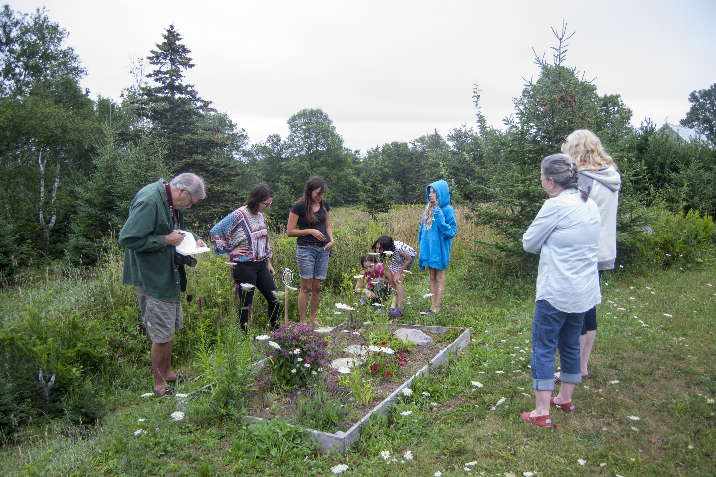 Learning about pollinator-friendly plant species