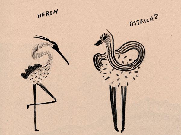 web_weirdbirds.jpg