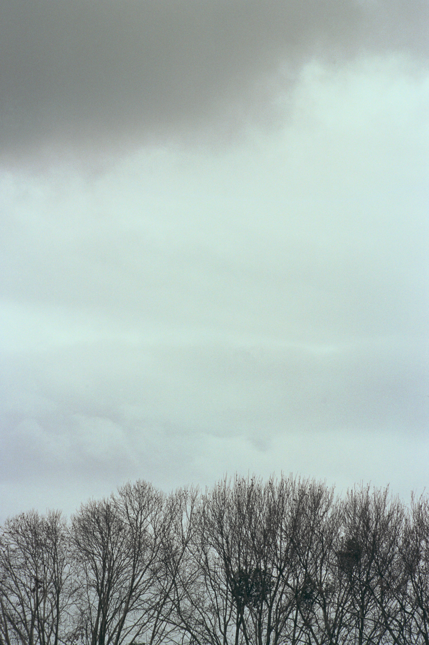 170616-Naked-Trees-web.jpg