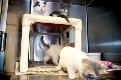Paulines kittens 3