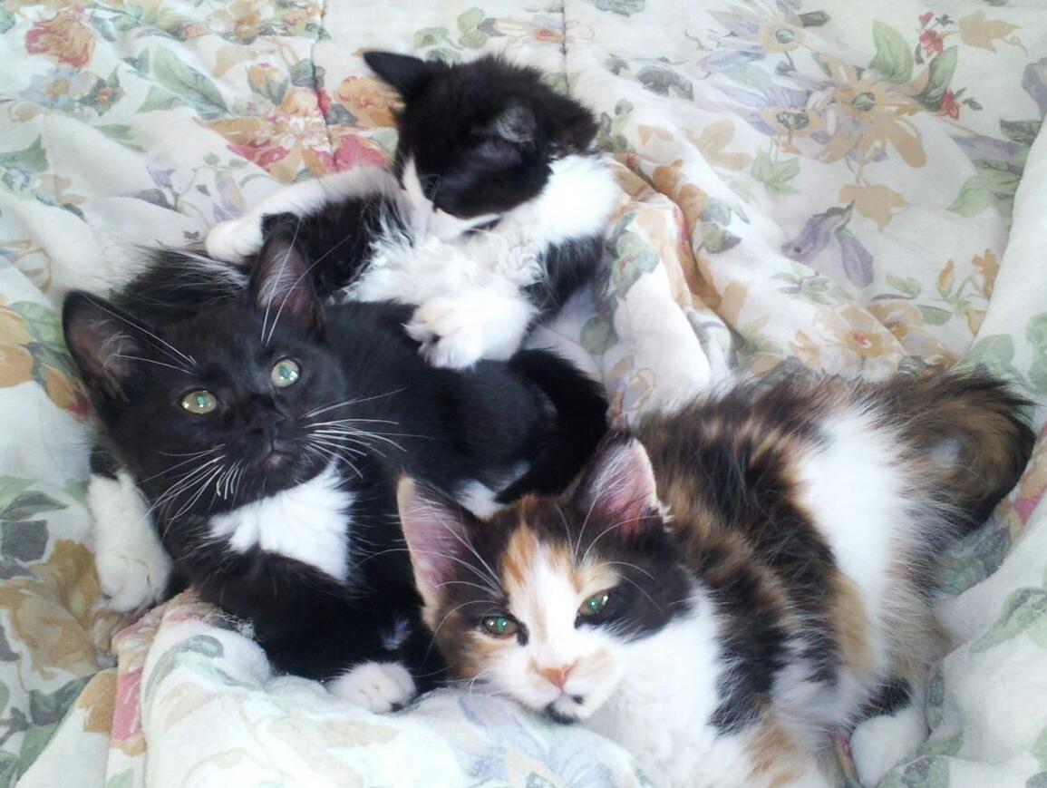 Jackson, Penny & Scarlett