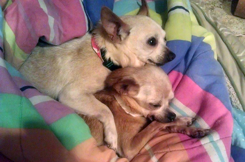 Drew and Lulu, missing Cammi while she was in surgery