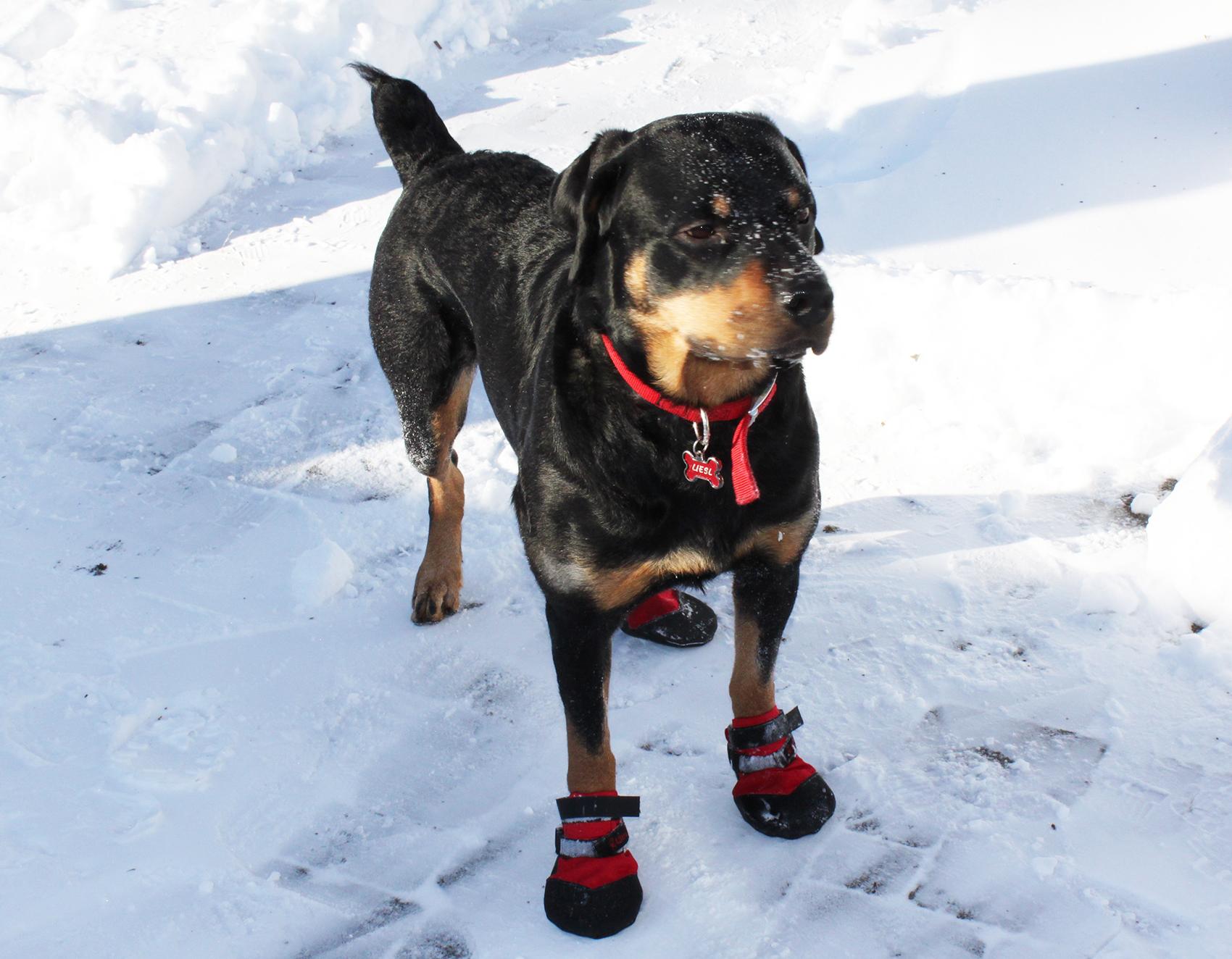 Liesl's Dad keeps her feet and heart warm!