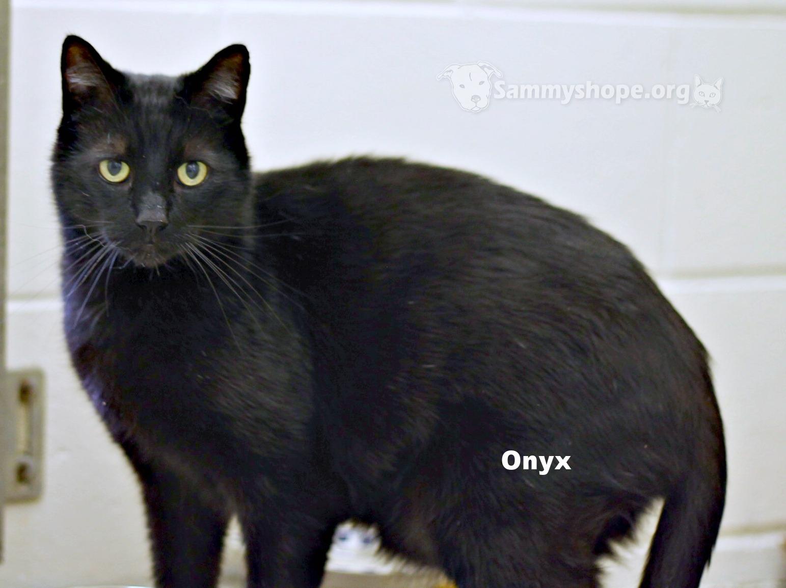 Onyx 2.jpg