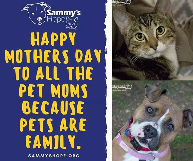Happy Mother's Day from Sammy's Hope! We're open from 11am-4pm if Mom needs a new furry #Bff!! www.sammyshope.org #SammysHopeLove