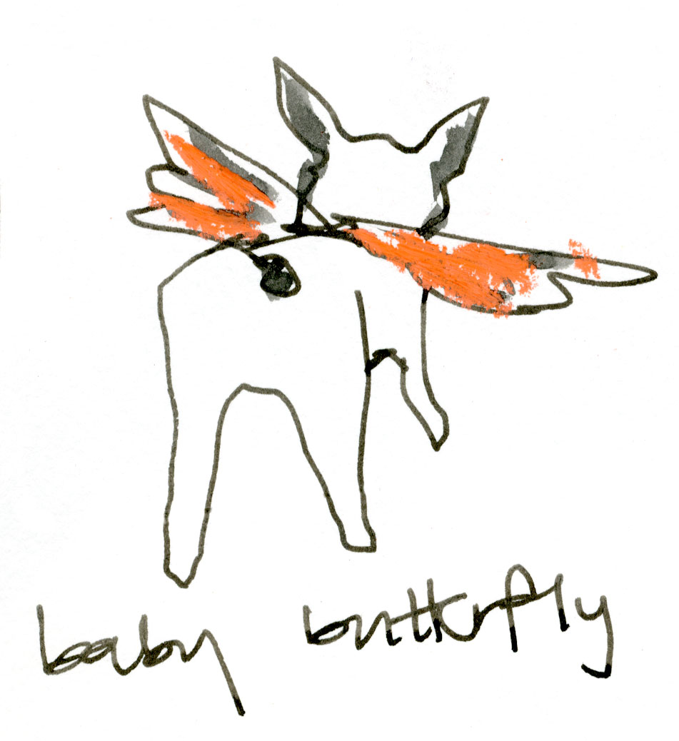 Baby butterfly © Carly Larsson 2014