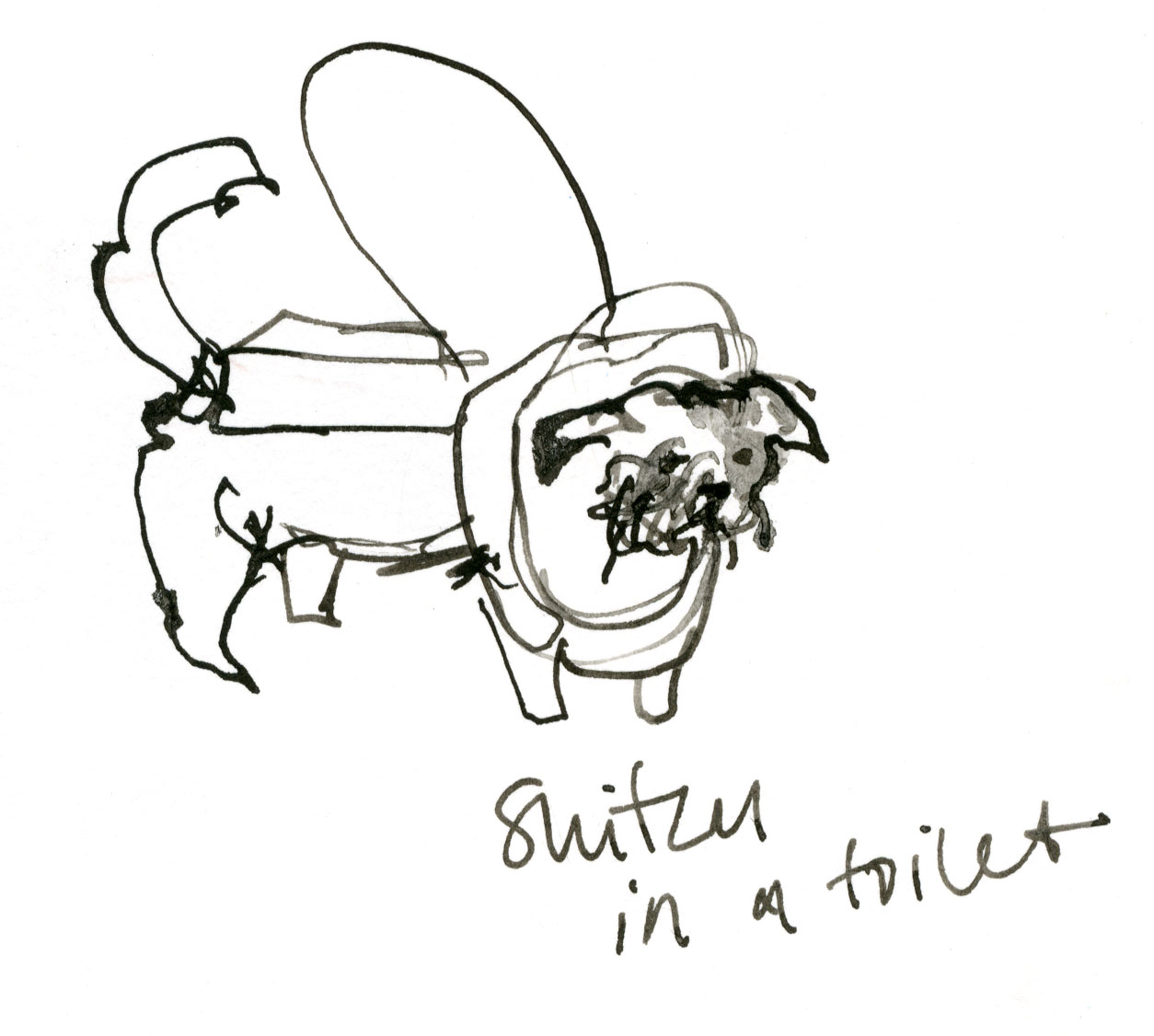 Shih Tzu in a toilet © Carly Larsson 2014