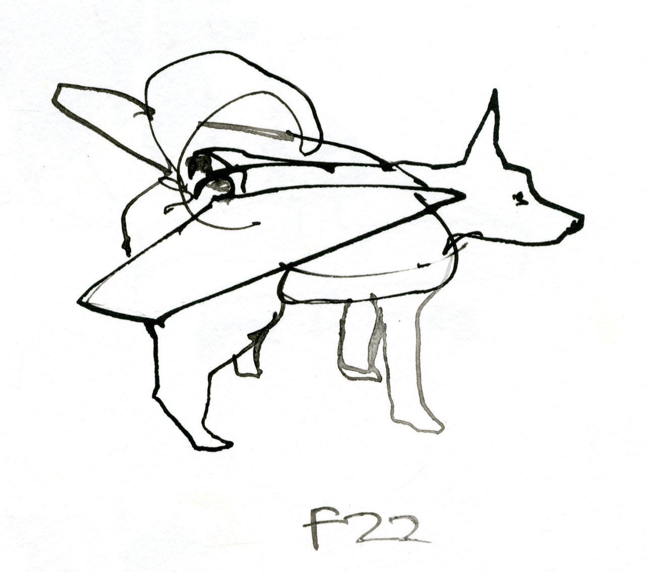 F22 Bomber dog © Carly Larsson 2014