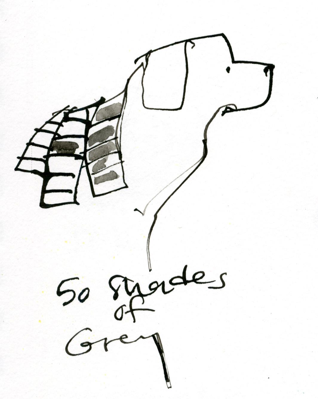 50 Shades of Grey dog © Carly Larsson 2014