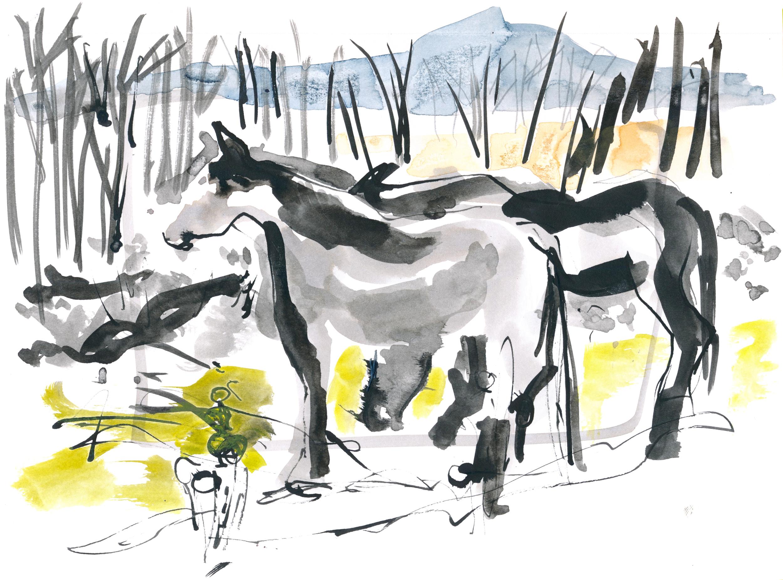 Horses huddling for warmth © Carly Larsson 2015