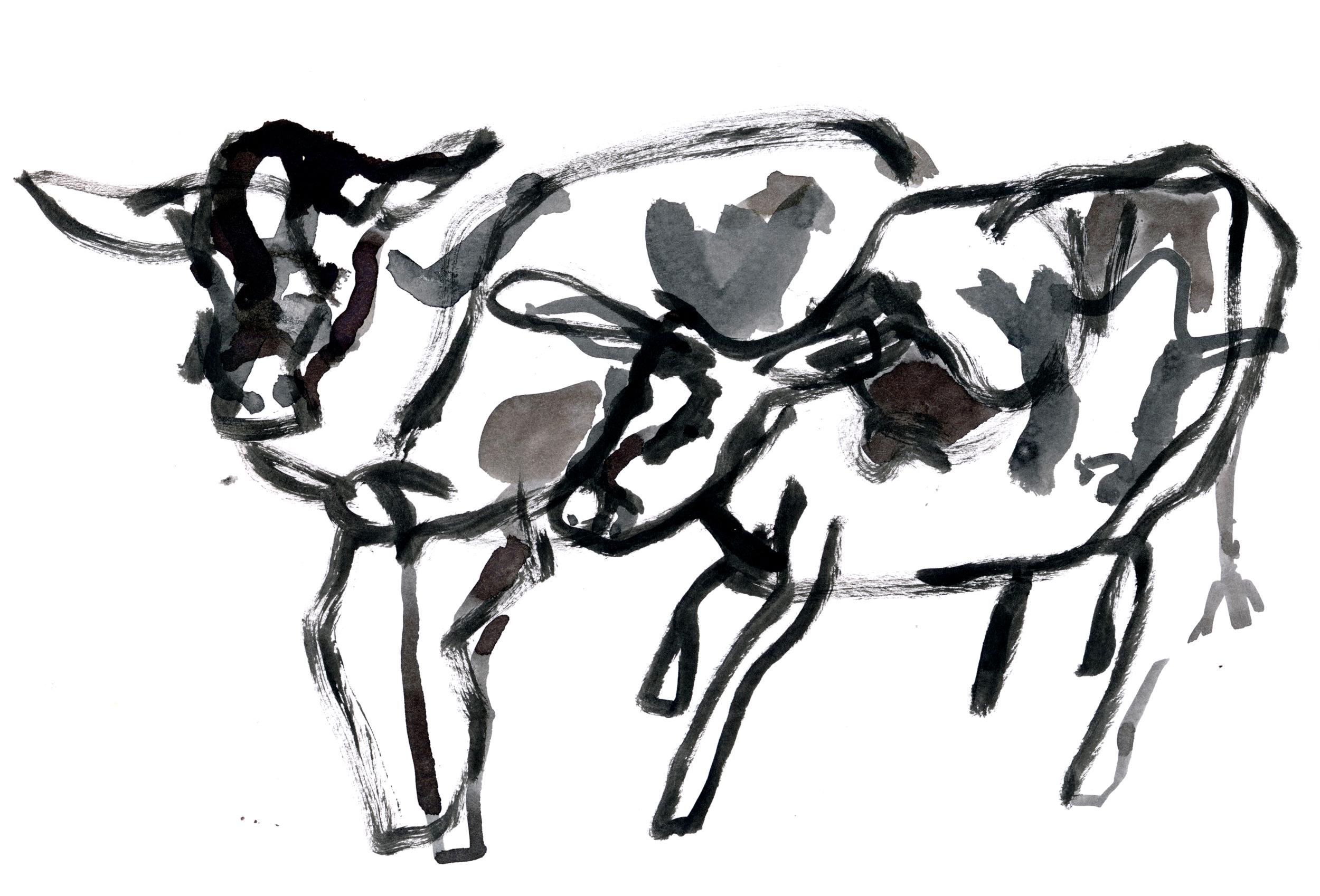 2015.11.29 Cows 1.jpg