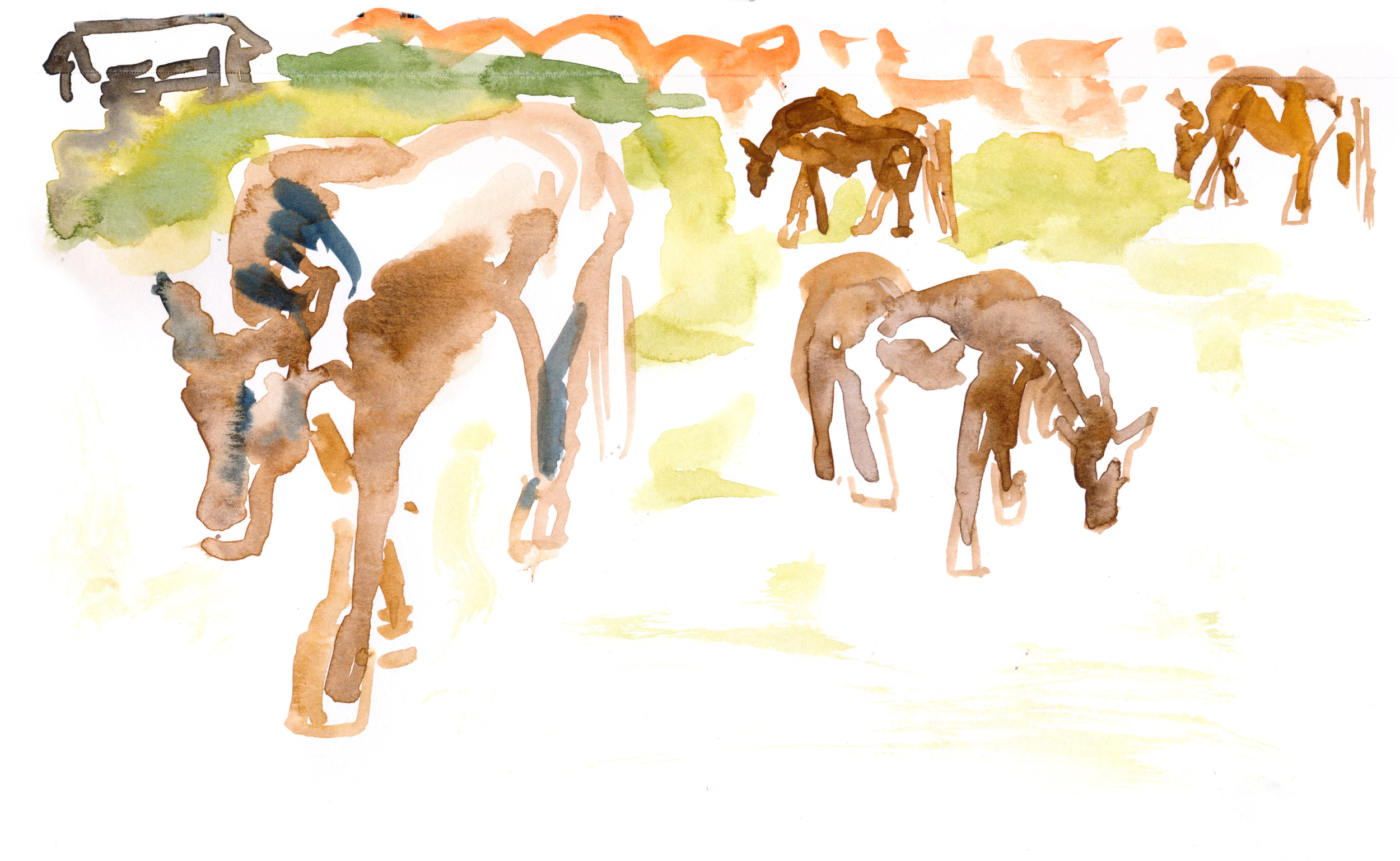 Grazing horses - much livelier than the duds in the other field © Carly Larsson 2015