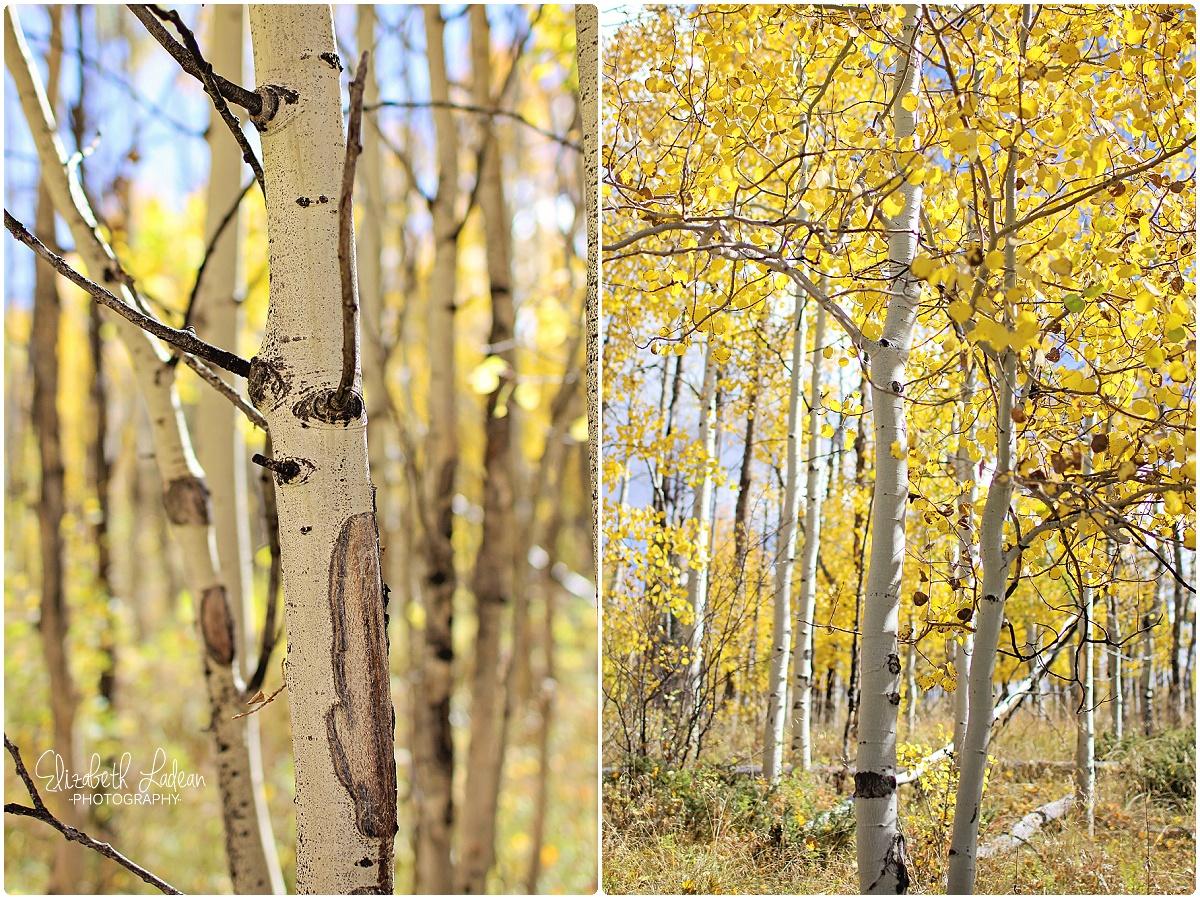 Colorado - Acorn Creek_0045.jpg