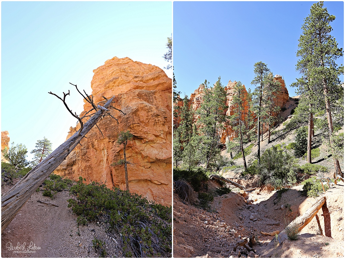 Bryce Canyon National Park_B&Wtravel_1687.jpg