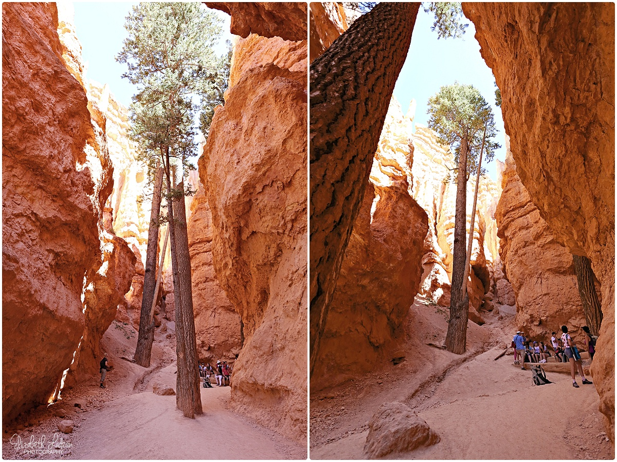 Bryce Canyon National Park_B&Wtravel_1692.jpg