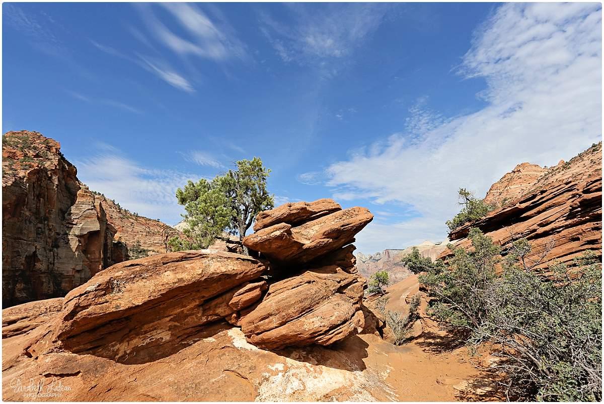 Zion National Park_B&Wtravel_1746.jpg
