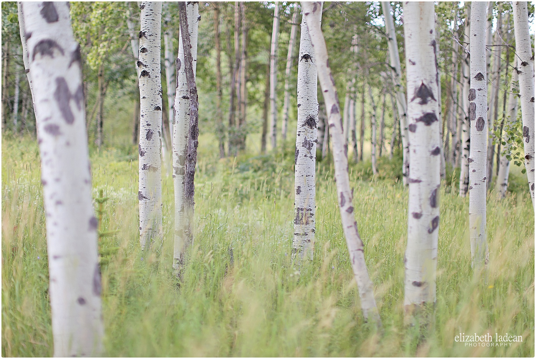Colorado-Conifer+Evergreen-ElizabethLadeanPhotography--_6057.jpg