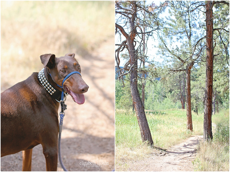 Colorado-Conifer+Evergreen-ElizabethLadeanPhotography--_6058.jpg