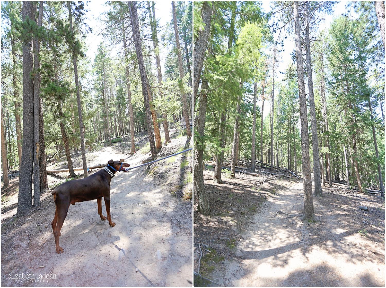 Colorado-Conifer+Evergreen-ElizabethLadeanPhotography--_6067.jpg