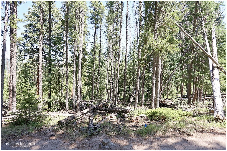 Colorado-Conifer+Evergreen-ElizabethLadeanPhotography--_6071.jpg