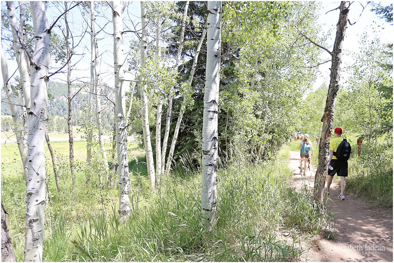 Colorado-Conifer+Evergreen-ElizabethLadeanPhotography--_6072.jpg