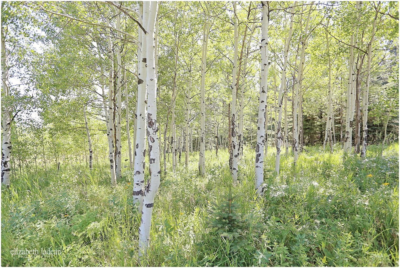 Colorado-Conifer+Evergreen-ElizabethLadeanPhotography--_6073.jpg
