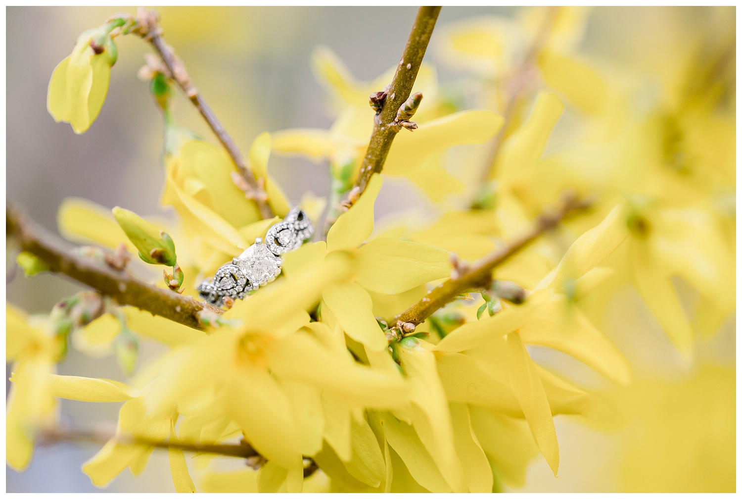 Engagement-Photos-at-Loose-Park-Springtime-KC-Elizabeth-Ladean-Photography_A+D-0407--_6874.jpg