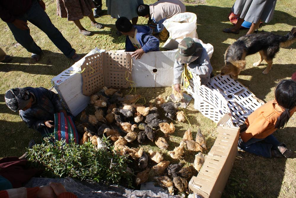 chickens-13.jpg