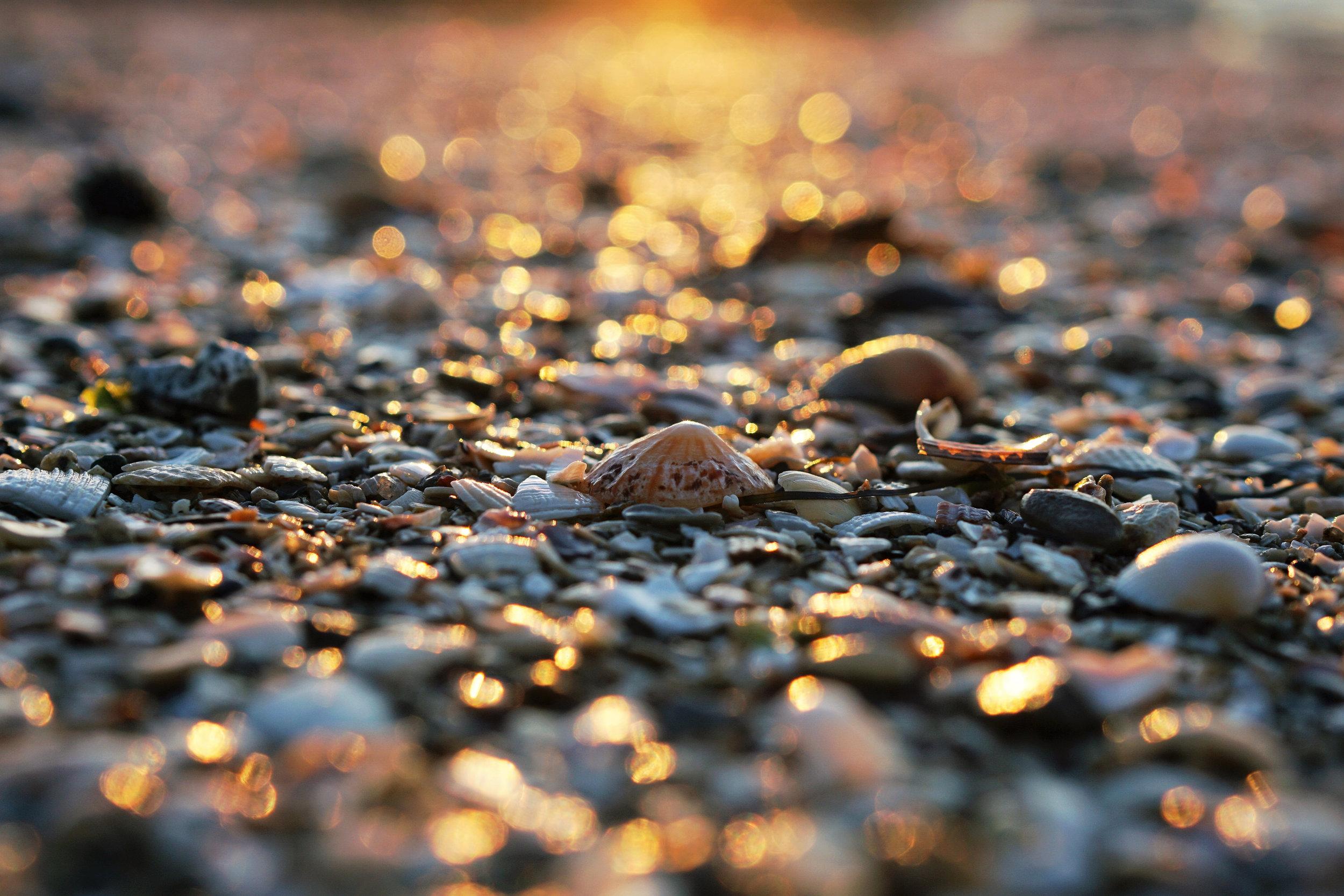 landscape-shells close up sun reflecting--erwan-hesry-42660.jpg