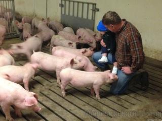 Chuck and Edwin Pigs - Minnesota Farm Living