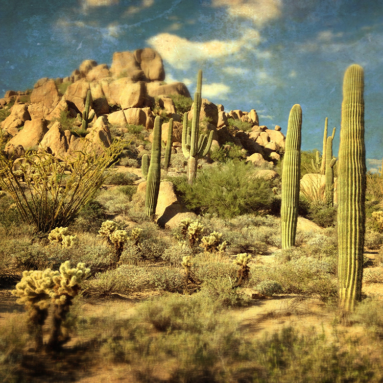 Arizona-cacti_web.jpg