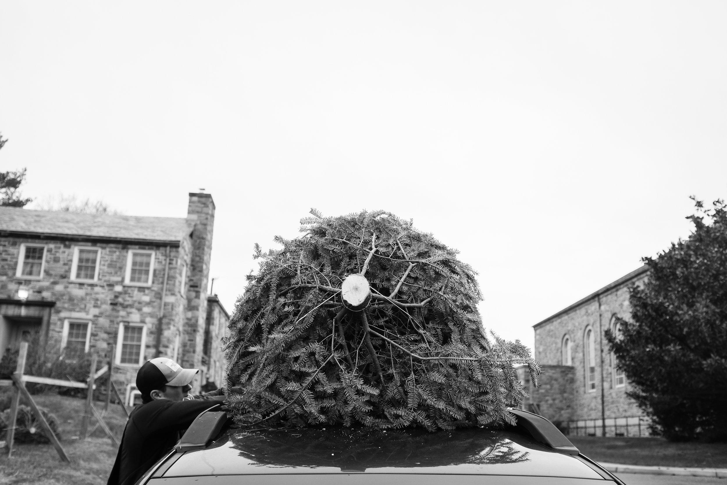 xmas tree -5.jpg