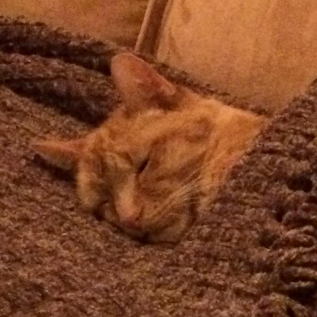 Juniper all tucked in