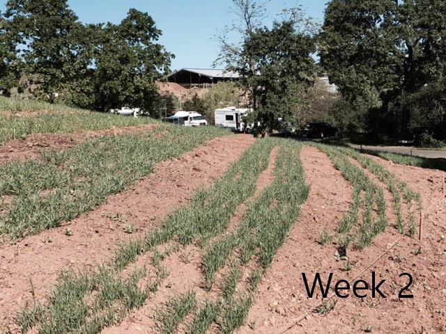 week-21.jpg