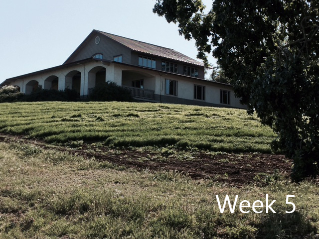 week-5-1.jpg