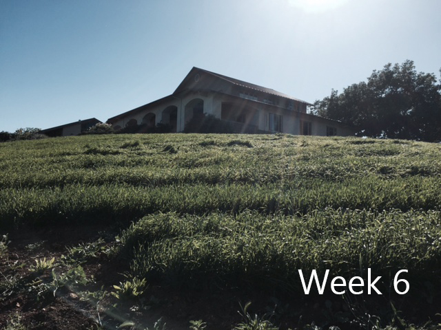 week-6.jpg