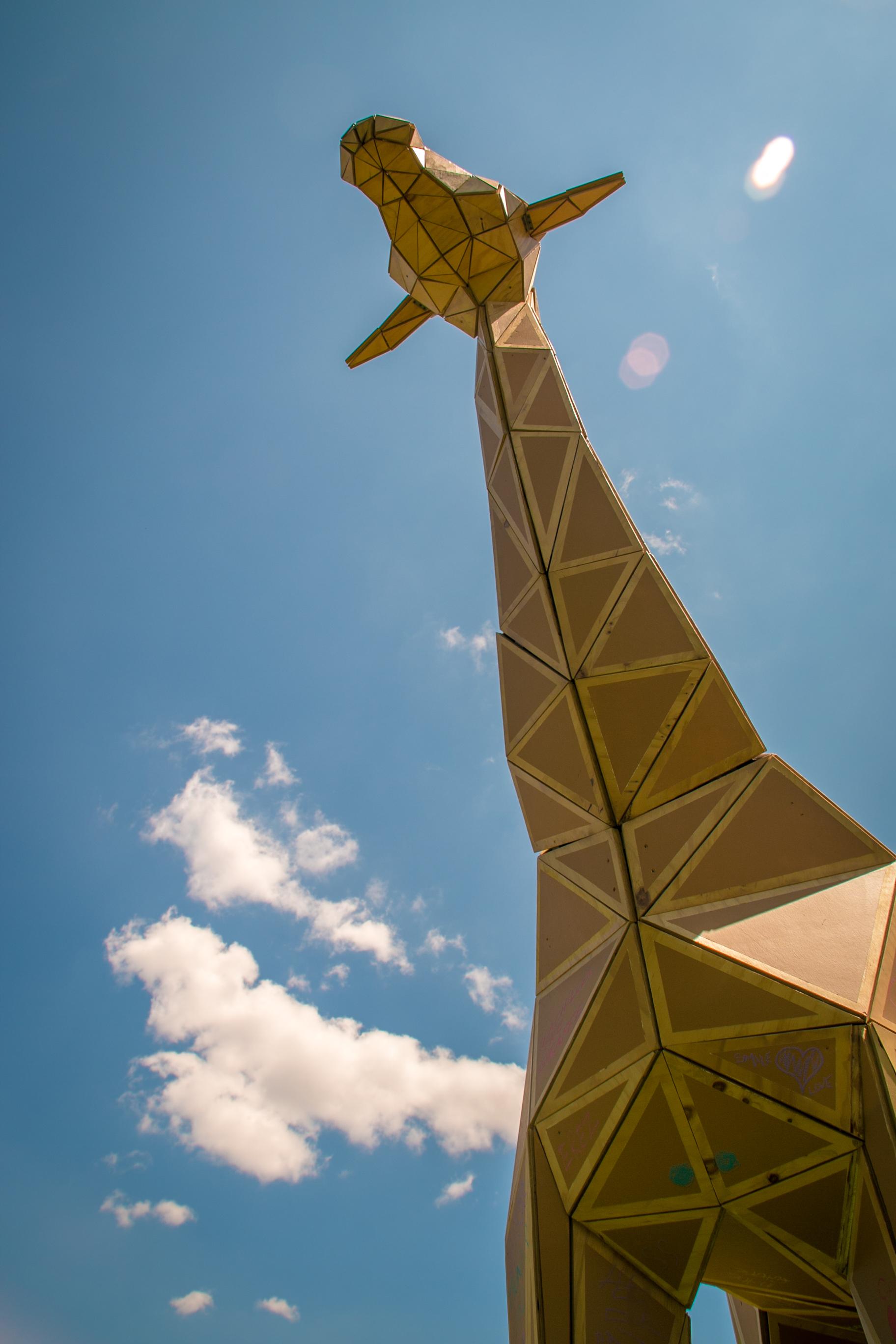 achilles the giraffe  (14 of 49).jpg