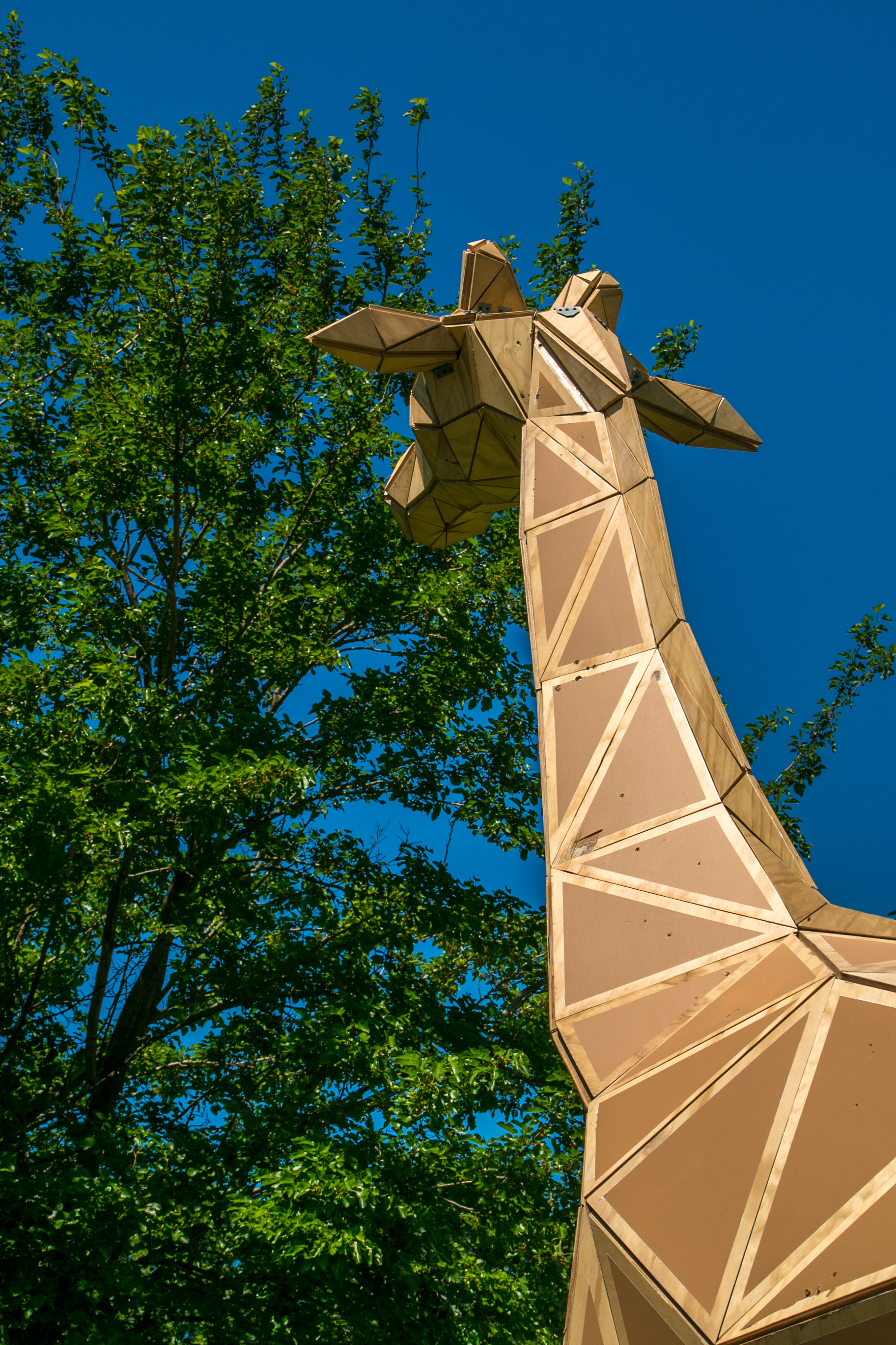 achilles the giraffe  (12 of 49).jpg