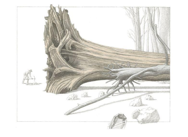 Antonio Marinoni. Illustration pour  Le Jardin des plantes  d'August Strindberg aux éditions Notari.