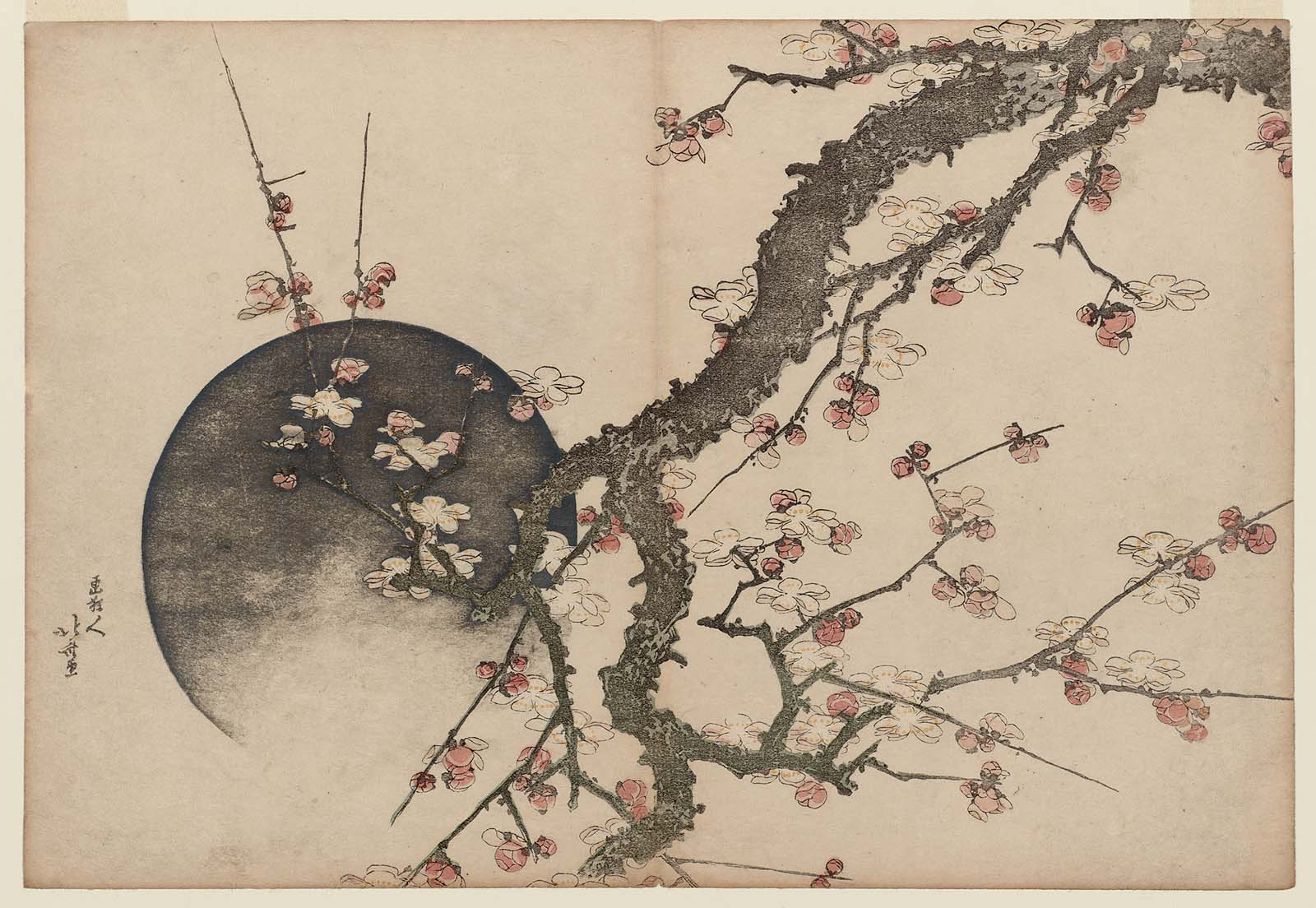 Hokusai.   Fleurs de prunier et lune  , Album Mont Fuji au printemps ( Haru no Fuji)  . Museum of Fine Arts, Boston.