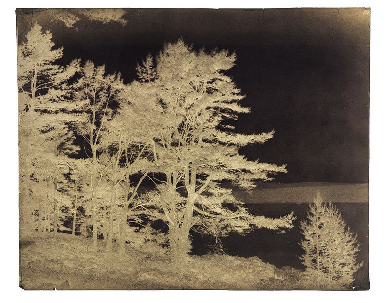 Négatif sur papier ciré d'Horatio Ross,  c. 1850-1860.  Fir trees on the bands of Dornoch . Hans P. Kraus Jr, New York.