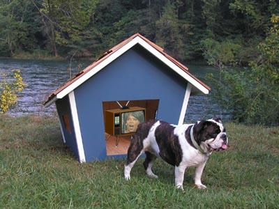 dog-house-oprah.jpeg