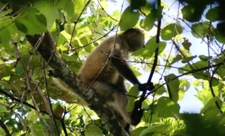 A monkey playing.