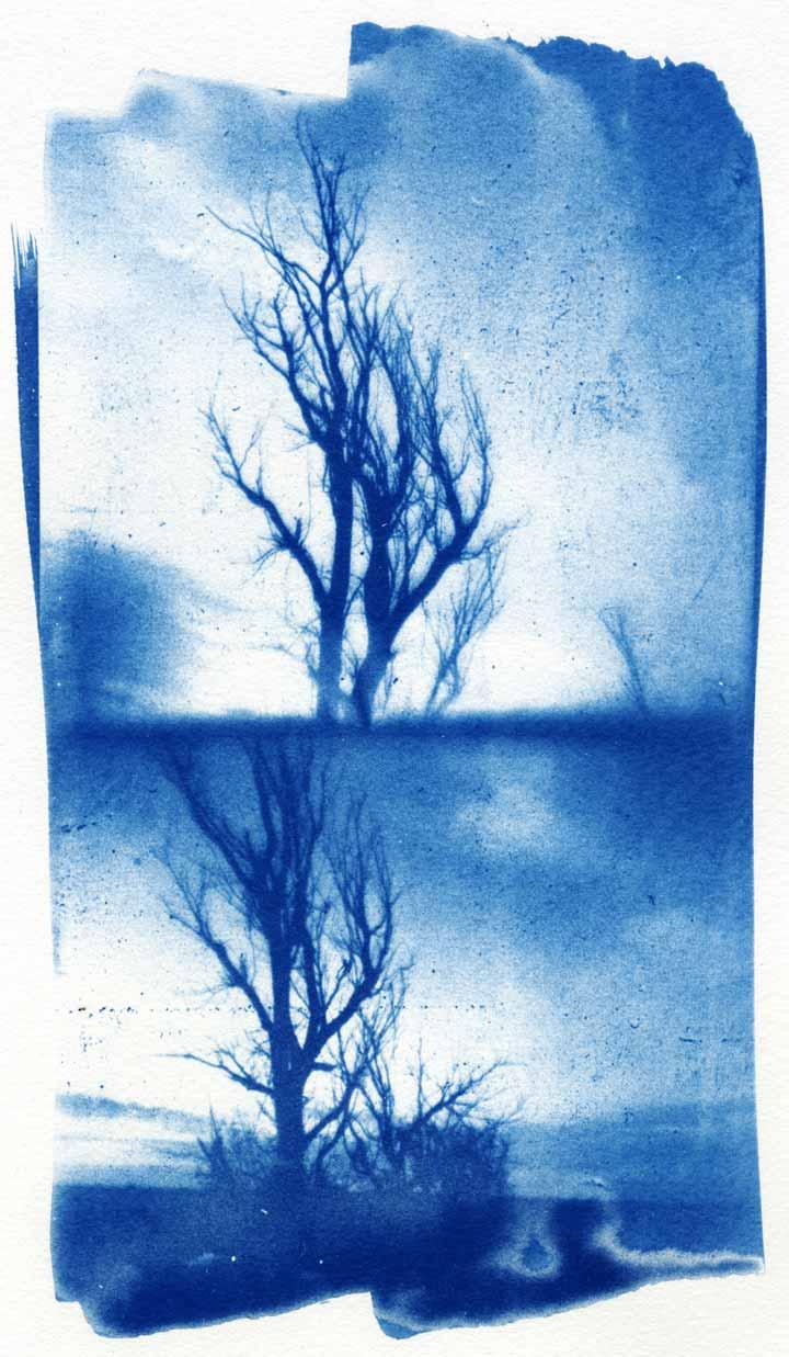 tree-8.jpg