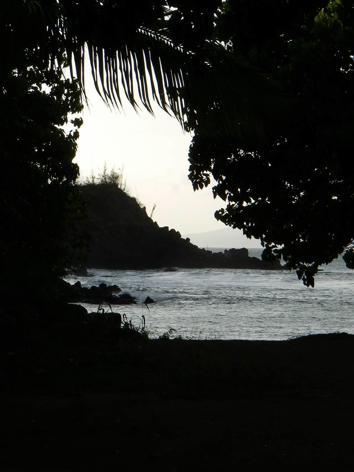 2008 Backlit Maui.jpg